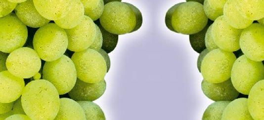 Vendita piantine di lilla online - Coltivare uva da tavola in vaso ...
